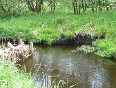 Uferabbruch gegenüber der ersten Doppelpfahlbuhne