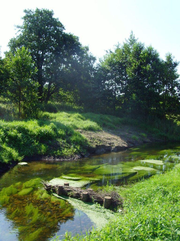 Rantzau im Holsteiner Wald 2008